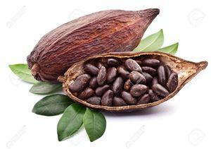 Cacao (Cocoa)